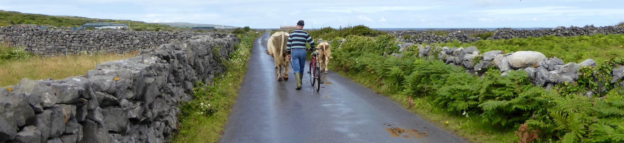Kendra Moore's photo of a farmer walking two cows down a road bordered by green fields and low-lying rock walls